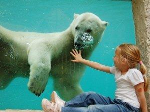 sostoo-zoo