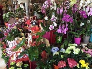 Rózsák Háza Virág és Ajándéküzlet