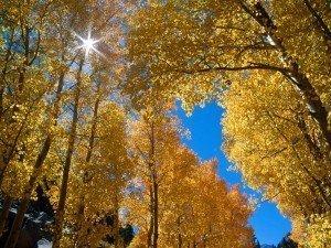 őszi-kép-természet