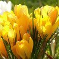 Tavaszi akció a Lénárt Apartmanokban