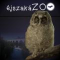 Állatkertek éjszakája a Hortobágyon-Térségi